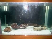 Breeding Pair Bristlenose Catfish + Set up Kippa-ring Redcliffe Area Preview