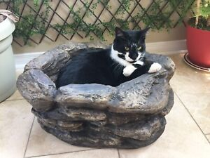 Missing black and white cat