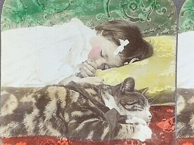 Antique Stereoview GIRL CHILD SLEEPING with CAT Victorian Old Photo