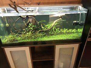 rimless tank adopt or rehome pets in toronto gta kijiji