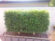 PRUNING, TRIMMING, WEEDING, MOWING, TIDY UPS, INSPECTION CLEANS. Andrews Farm Playford Area Preview