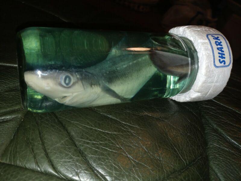 Real Shark in a Bottle Jar, Marine Specimen Taxidermy Professional