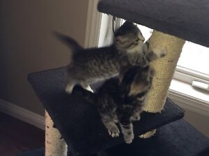 Sweet kittens looking for their furever homes.
