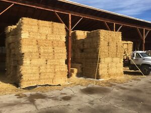 Straw in small square bales
