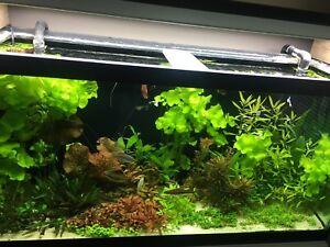 Aquarium plant for sale