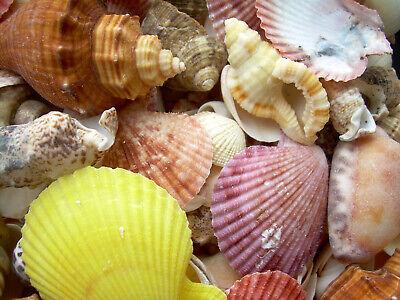 Sea Shell Vatican