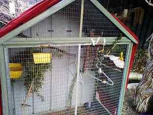 Looking for zebra Finch hens Merriwa Upper Hunter Preview