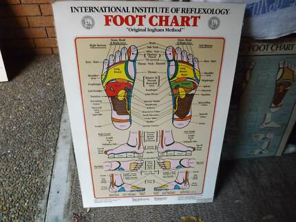 Anatomy Posters Miscellaneous Goods Gumtree Australia Eastern