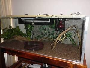Frog/ Retile Terrarium Tea Tree Gully Tea Tree Gully Area Preview