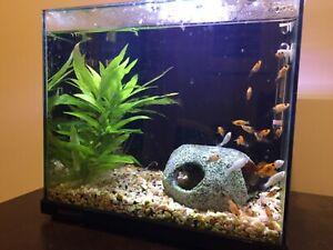 13L Aqua One Fish Tank