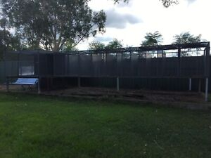Huge bank SUSPENDED AVIARIES - 11 cages in total!  Maitland Maitland Area Preview