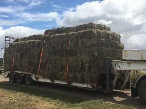 Small square grass hay Birregurra Colac-Otway Area Preview