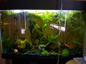 *WANTED* Fish tanks / Aquariums and accessories Gosnells Gosnells Area Preview