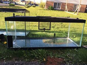4  fish/reptile/turtle tanks 2 with lids!