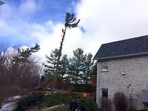 Tree removal services  London Ontario image 1