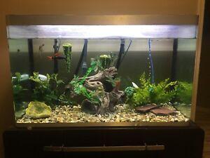 Open top fish tank