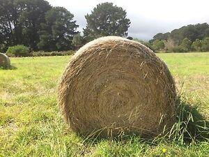 Round hay bales 5 x 4 Boneo Mornington Peninsula Preview