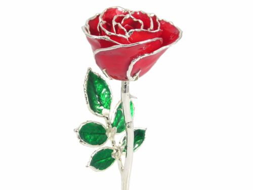 Sterling Silver Trimmed Red Rose 8 Inch (Free Christmas Gift Box)