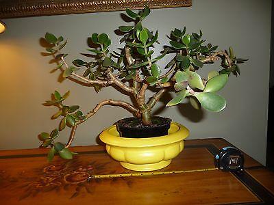 (VTG. Mid Century Modern Ceramic Pottery Haeger USA Lemon Yellow  Planter~Large)