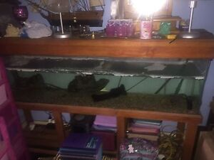 6ft fish tank Matraville Eastern Suburbs Preview