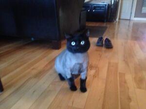 J'ai perdu mon chat, Apelez si vous l'avez!