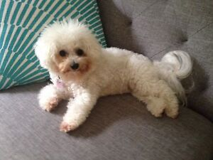 SMALL DOGS HOLIDAY ACCOMMODATION/PET SITTING Trinity Park Cairns Area Preview
