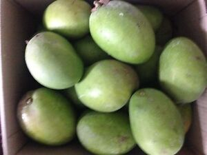 Raw and Ripe Kensington Mangoes - 50 cents each Maryland Newcastle Area Preview