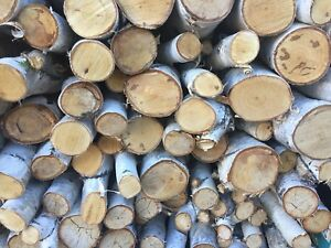 Decorative White Birch firewood rounds logs