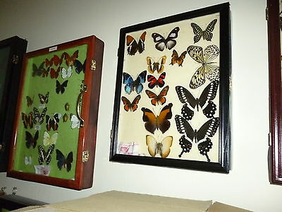 Finished display frame with your valuable collection safe and sound for investment, enjoyment, and future generations.