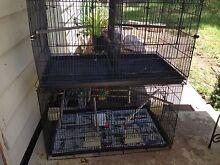 Large flight cage Pokolbin Cessnock Area Preview