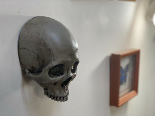 Wall Mounted  Real Human Skull By Zane Wylie