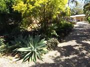 Agave Plants Yeppoon Yeppoon Area Preview
