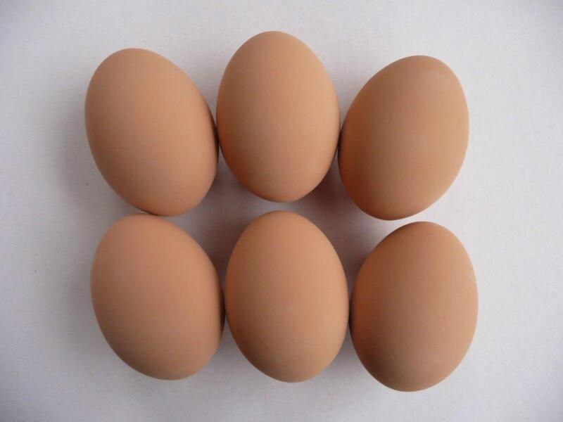 Duck Hatching Eggs: Poultry | eBay