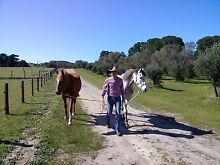 Horse Trainer/Lessons Mount Compass Alexandrina Area Preview