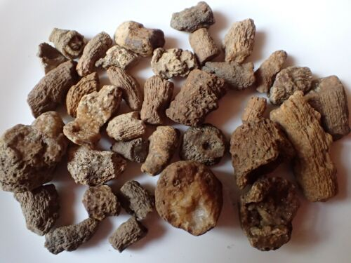 Fossil Horn Coral Collection Druzy Kentucky Specimen Curio Marine Research HC5