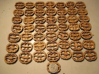 "Black Walnut Shells Slices 1-3/8"" 1/4"" Thick 55 Piece Free Shipping"