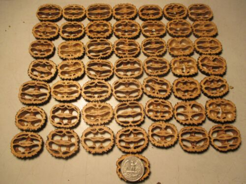 """Black Walnut Shells Slices 1-3/8"""" 1/4"""" Thick 55 Piece Free Shipping"""