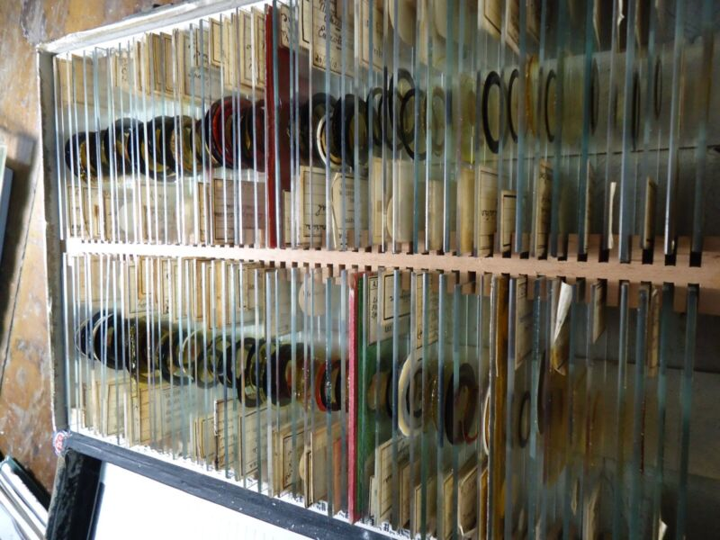Collection 100 ANTIQUE Microscope Slides 1900-1940 Plants Animals Bugs hand made
