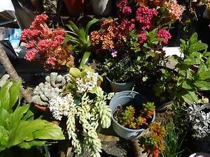 Lots of plants for sale, many varieties,  starting from $1.00. Panania Bankstown Area Preview