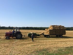 square bales of Wheat straw