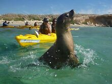 Eco-tourism sea kayak tour business for sale Safety Bay Rockingham Area Preview