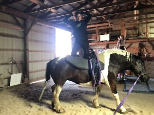 Adult Vaulting Clinic