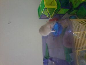 baby rats need a home