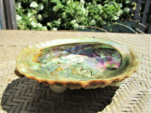 Small Vintage Abalone Shell Bowl Trinket Dish Soap Dish Beach Decor Footed