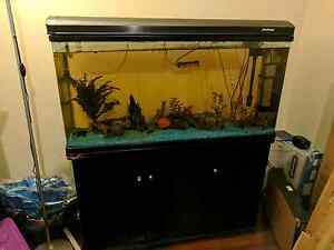 Large aquarium and stand - includes fish and all equipment East Victoria Park Victoria Park Area Preview