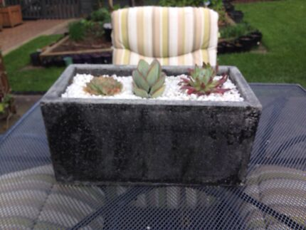 Solid concrete pot with 3 succulents l41cm w21cm h20cm Lenah Valley Hobart City Preview