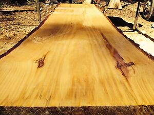 LOTS OF NATURAL EDGE TIMBER SLABS FROM $20 Elimbah Caboolture Area Preview