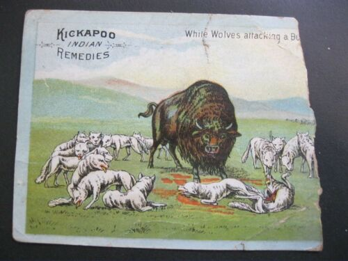 Victorian Trade Card RARE Kickapoo Indian Wolves Attacking Buffalo Scraps 33