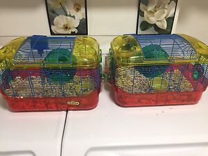 Two Syrian Hamster with cage and food freeee!!