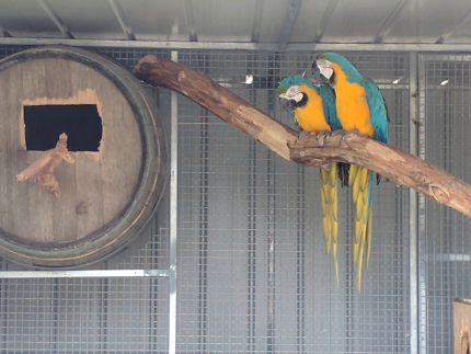 Closing down sale- Parrots and Aviaries - Everything must go